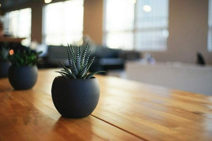 Pot plants on a table help clean the air