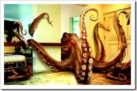 Giant octopus at home